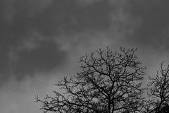 Mostre em silhueta a árvore inoperante no fundo dramático escuro do céu para assustador ou a morte Noite de Dia das Bruxas Concei fotos de stock royalty free