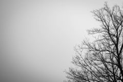 Mostre em silhueta a árvore inoperante no fundo dramático escuro do céu para assustador ou a morte Noite de Dia das Bruxas Concei fotografia de stock royalty free
