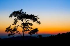 Mostre em silhueta a árvore no céu colorido no tempo do por do sol Imagens de Stock