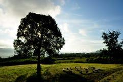 Mostre em silhueta a árvore, o fogo do acampamento e o céu claro Fotos de Stock Royalty Free