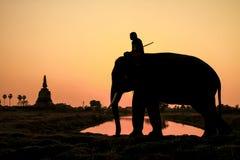 Ação da silhueta do elefante na província de Ayutthaya Fotos de Stock