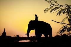 Ação da silhueta do elefante na província de Ayutthaya Fotos de Stock Royalty Free