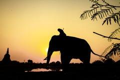 Ação da silhueta do elefante na província de Ayutthaya Imagem de Stock Royalty Free