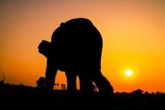 Ação da silhueta do elefante na província de Ayutthaya Fotografia de Stock