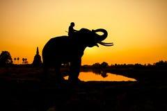 Ação da silhueta do elefante na província de Ayutthaya Fotografia de Stock Royalty Free