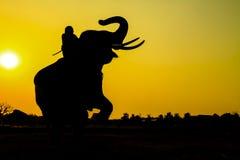 Ação da silhueta do elefante na província de Ayutthaya Foto de Stock