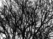 Mostre em silhueta as árvores e os ramos isolados no fundo branco Fotos de Stock Royalty Free