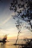 Mostre em silhueta a imagem do cenário durante o por do sol impressionante com os manguezais caídos e sós na costa Imagens de Stock Royalty Free