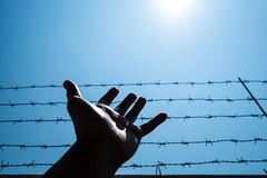 Mostre em silhueta a mão que estende ao céu com barbwire e luz solar foto de stock royalty free