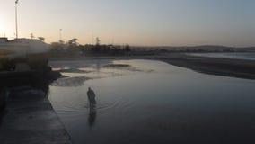 Mostre em silhueta o homem idoso que anda com o bastão na água perto do oceano durante o por do sol em Marrocos video estoque