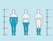 Mostre em silhueta o nível mostrando infographic da porcentagem da água na ilustração do vetor do corpo humano Fotografia de Stock