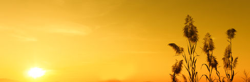 Mostre em silhueta o por do sol e o papel de parede amarelo do céu, fundo Fotografia de Stock
