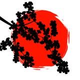 Mostre em silhueta o ramo de sakura no fundo do sol Fotografia de Stock Royalty Free