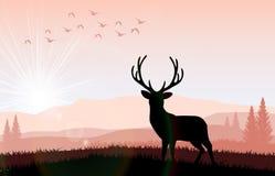 Mostre em silhueta um cervo a alimentação no por do sol brilhante ilustração do vetor