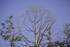 Mostre em silhueta uma árvore contra o céu Fotos de Stock Royalty Free