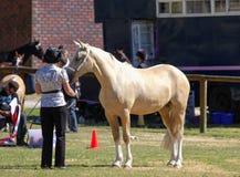 Mostre o cavalo imagem de stock