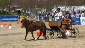 Mostre transportes do cavalo durante os cavalos públicos do festival da cidade no parque Kaivopuisto filme