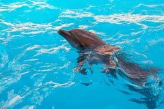 mostri con i delfini nel Dolphinarium Immagine Stock Libera da Diritti