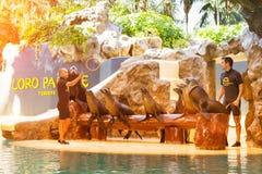 Mostri con i delfini nello stagno, il parque di Loro, Tenerife Fotografia Stock Libera da Diritti