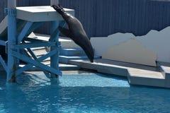 Mostri con i leoni marini nell'acquario a New York Fotografia Stock