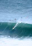 mostri dell'Hawai della baia che praticano il surfing waimea Immagine Stock Libera da Diritti