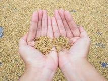 Mostri gli agricoltori di secchezza della risaia nel nord-est in Tailandia Fotografia Stock Libera da Diritti