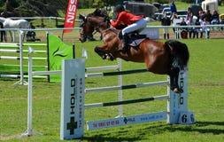 Mostri il cavallo ed il cavaliere di salto immagine stock libera da diritti