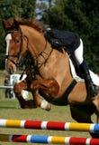 Mostri il cavallo ed il cavaliere di salto immagini stock libere da diritti