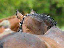 Mostri il cavallo nell'estratto Fotografia Stock