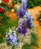 Mostri il giardino con i fiori di speronella Fotografie Stock