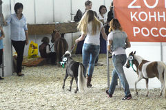 Mostri Mosca che sbarazza Hall International Horse Exhibition Fotografia Stock Libera da Diritti