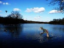 Mostro in acqua Fotografia Stock Libera da Diritti