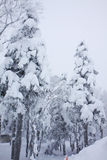 Mostro della neve sulla foresta Fotografie Stock Libere da Diritti