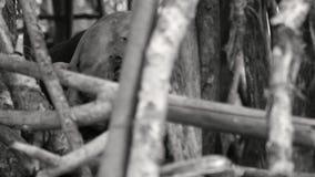 Mostro di B&W nella foresta video d archivio