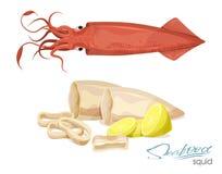 Mostro marino animale dell'oceano Calamaro, tentacoli ed anelli salati del calamaro Illustrazione isolata messa su un fondo bianc Fotografia Stock Libera da Diritti
