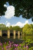 mosty kwiaty Zdjęcia Stock