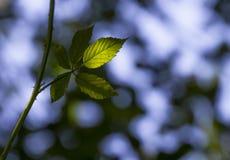 mot bakgrund field blåa oklarheter för grön vitt wispy natursky för gräs royaltyfria foton