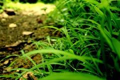 mot bakgrund field blåa oklarheter för grön vitt wispy natursky för gräs Arkivbild