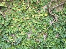 mot bakgrund field blåa oklarheter för grön vitt wispy natursky för gräs Royaltyfria Bilder
