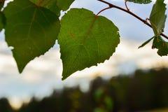 mot bakgrund field blåa oklarheter för grön vitt wispy natursky för gräs blå green låter vara skyen Arkivfoton