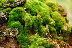 mot bakgrund field blåa oklarheter för grön vitt wispy natursky för gräs Moss Close Up View Royaltyfria Foton