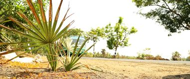 mot bakgrund field blåa oklarheter för grön vitt wispy natursky för gräs Royaltyfri Fotografi