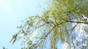 mot bakgrund field blåa oklarheter för grön vitt wispy natursky för gräs blåsa på sidor för vindträdgräsplan arkivfilmer