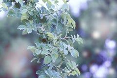 mot bakgrund field blåa oklarheter för grön vitt wispy natursky för gräs Grönt blad med closeupen för daggdroppar Naturbaksida Arkivfoto