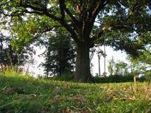mot bakgrund field blåa oklarheter för grön vitt wispy natursky för gräs Stor gammal ek på fältet av grönt gräs i solnedgång royaltyfri foto