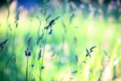 mot bakgrund field blåa oklarheter för grön vitt wispy natursky för gräs Arkivbilder