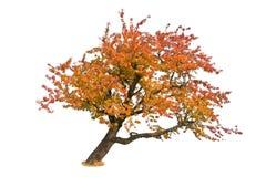 mot bakgrund isolerad treewhite Royaltyfri Foto