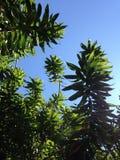 mot blå green låter vara skyen Fotografering för Bildbyråer