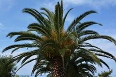 mot blå klar fransman gömma i handflatan polynesia skytahiti trees Royaltyfria Bilder