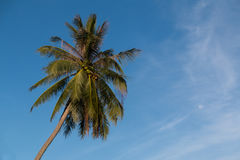 mot blå kokosnöt gömma i handflatan skyen Arkivbilder